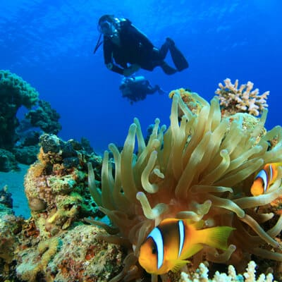 Elite Divers: Exciting local and global scuba travel